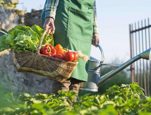 nawadnianie warzyw