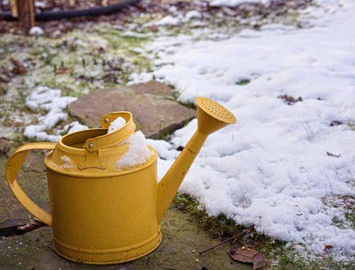 podlewanie ogrodu zimą