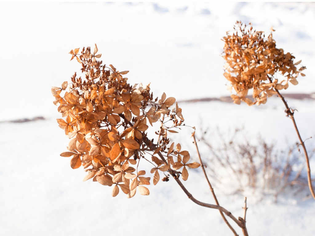 Rośliny ogrodowe zimą